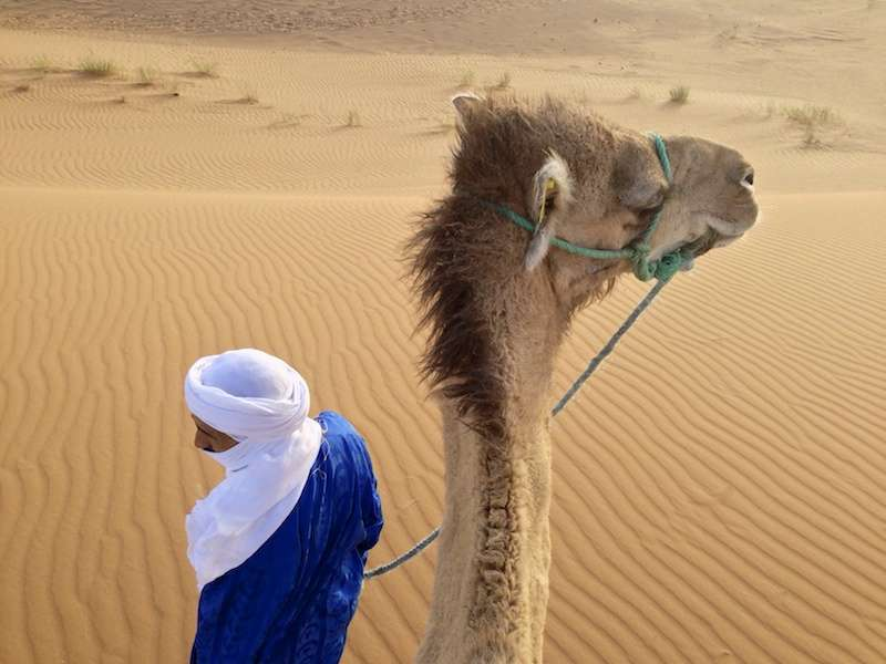 Camel driver looking left, camel looking right in Sahara desert, Merzouga, Morocco