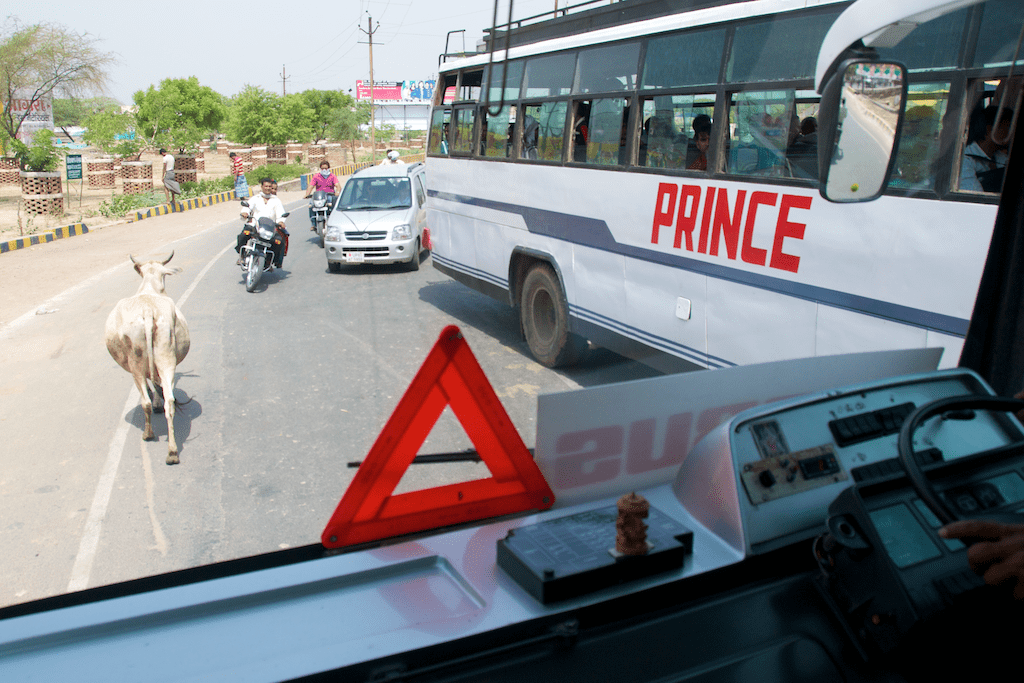 Cow on the road with big bus in Agra, India by Ralph Velasco