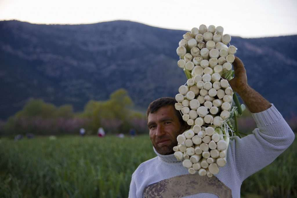 Man holding three bundles of leeks in leek field near Kusadasi, Turkey by Ralph Velasco