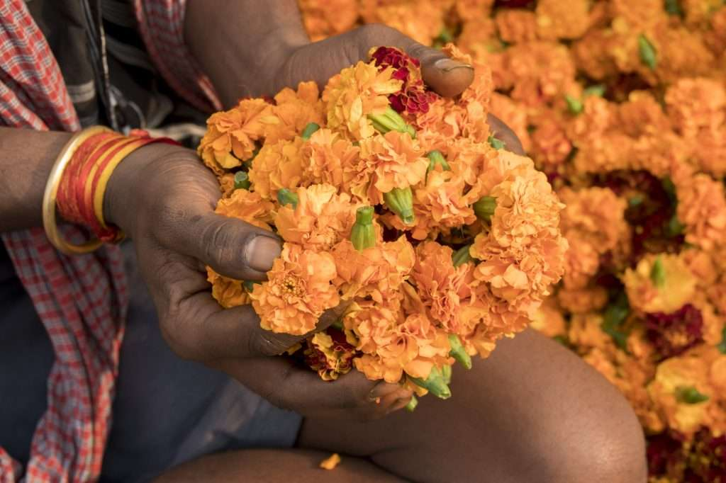 Man with handful of marigolds in Delhi, India by Ralph Velasco