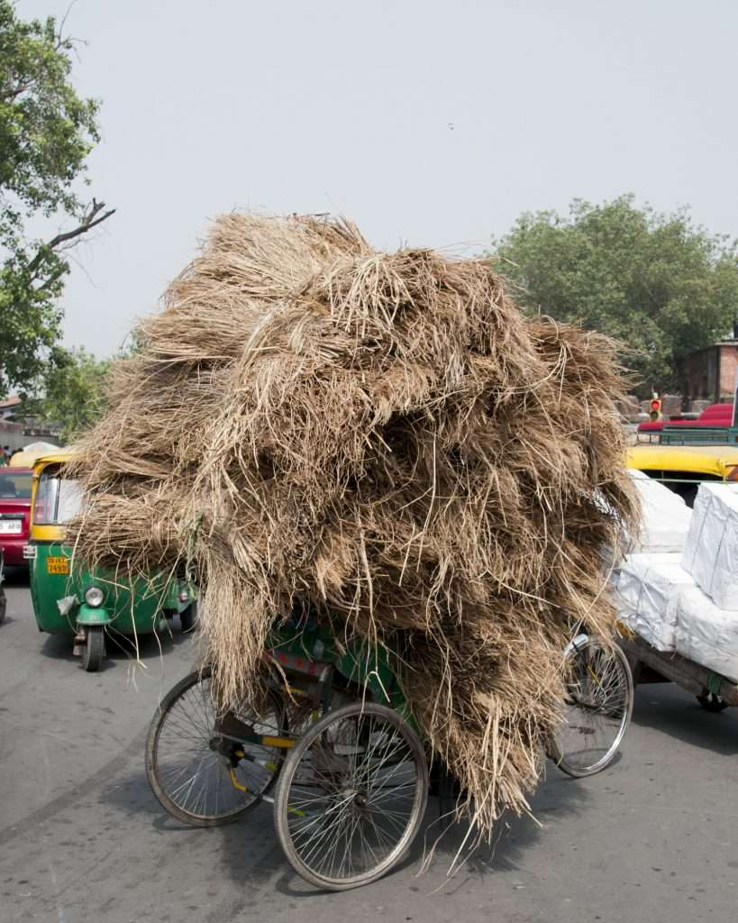 Tricycle bike with stacked hay in Delhi, India by Ralph Velasco