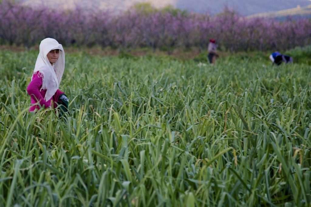 Woman in pink walking in leek field near Kusadasi, Turkey by Ralph Velasco