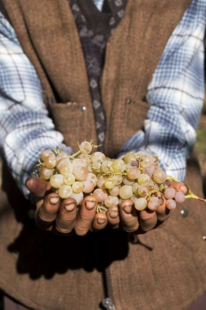 Hasan with Grapes in Hands in Vineyard P - Kalkan, Turkey by Ralph Velasco