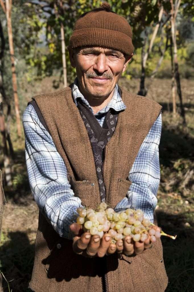 Hasan's Upper Body with Grapes in Hands in Vineyard P - Kalkan, Turkey by Ralph Velasco